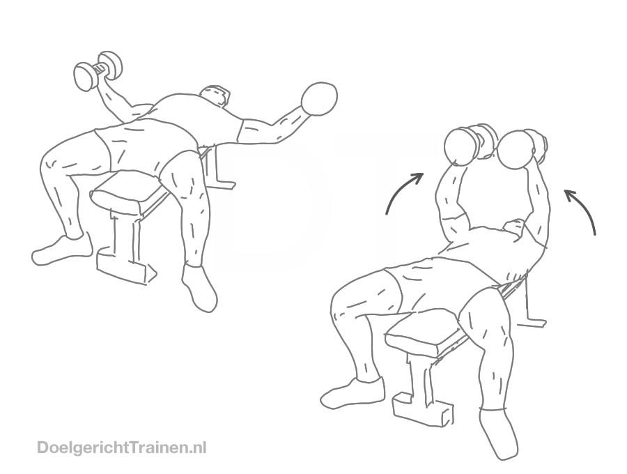 Fitness oefeningen borst - dumbbell borst flyes - afbeelding