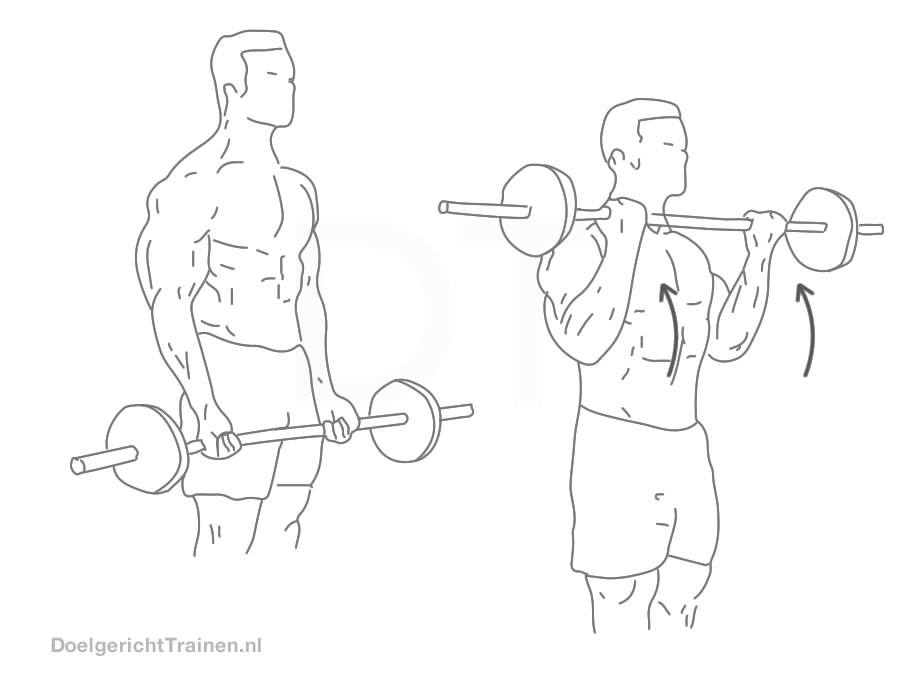 Fitness oefeningen armen - staamde biceps halter curl